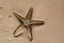 Starfish partially buried in white sand by Sami Sarkis Photography