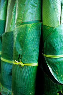 Rolls of banana tree leaves for sale at a market at Port Vila by Sami Sarkis Photography