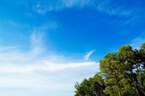 Rf-clouds-pines-sky-skyscape-treetops-lan0463