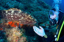 Scuba diver with a Dusky Grouper by Sami Sarkis Photography
