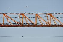 Flock of birds perching on construction crane by Sami Sarkis Photography