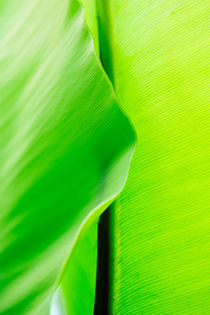 Close up of green leaf von Sami Sarkis Photography
