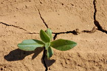 Green plant on dry cracked ground in summer by Sami Sarkis Photography