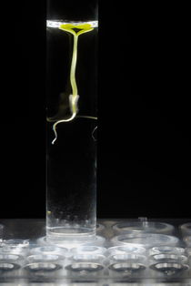 Seedling in test tube with water by Sami Sarkis Photography