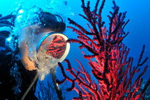 Diver's mask reflecting red gorgonian von Sami Sarkis Photography