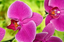 Purple Orchids by Sami Sarkis Photography