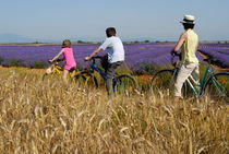 Family contemplating lavender field during bicycle trip von Sami Sarkis Photography