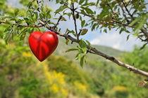 Heart shape on tree von Sami Sarkis Photography