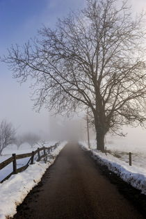 Bare tree and snowy countryroad by Sami Sarkis Photography
