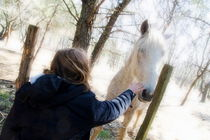 Girl stroking camargue horse at fence by Sami Sarkis Photography
