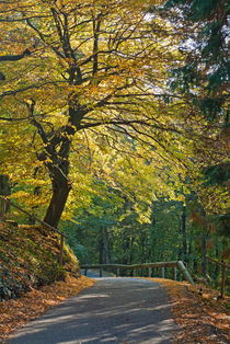 Road among colorful trees during autumn by Sami Sarkis Photography