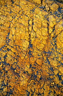 Yellow crust (close-up) on ash plain von Sami Sarkis Photography