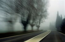 Blurry bare trees visible through the fog seen from a speeding car by Sami Sarkis Photography
