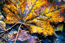Autumn leaves on the ground. by Sami Sarkis Photography