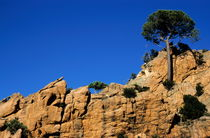 Rf-cliffs-piana-pine-rocks-scenic-tree-lds197