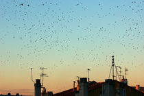 Rm-autumn-birds-flock-flying-rooftops-swallows-ani399