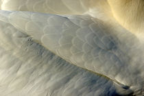 Plumage on a Northern Gannet (Morus bassanus) wing by Sami Sarkis Photography
