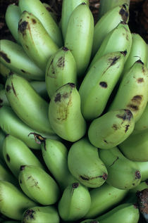 Banana bunches for sale at a market at Port Vila by Sami Sarkis Photography