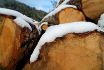 Pile of chopped logs covered in snow by Sami Sarkis Photography