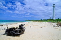 Bird sitting on the white sand beach looking toward the lighthouse by Sami Sarkis Photography