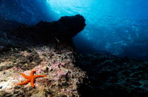 Rm-reef-rock-sormiou-creek-starfish-underwater-uw229