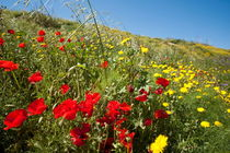 Rm-field-growth-meadow-wildflowers-var928