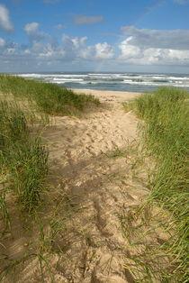 Path-beach-ocean-alrf-saa-fna6779