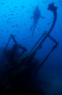 Rm-dalton-shipwreck-diving-fish-underwater-uw220