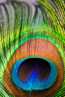 Vibrant colours of a peacock feather. von Sami Sarkis Photography