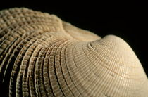 Detail of a textured surface of a seashell. by Sami Sarkis Photography