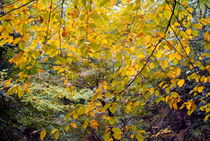 Colorful autumn trees by Sami Sarkis Photography
