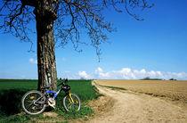 Mountain bike under a tree beside dirt road von Sami Sarkis Photography