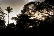 Silouhettes of Palm tree and Banyan trees at sunset von Sami Sarkis Photography
