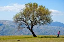 Little girl walking past a tree in springtime in the Alpujarras mountains von Sami Sarkis Photography