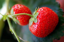 Rf-freshness-fruit-leaf-strawberries-var1111