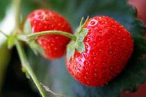 Red strawberries (fragaria ananassa) in garden. von Sami Sarkis Photography
