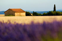 Rm-farm-field-home-lavender-valensole-lds344