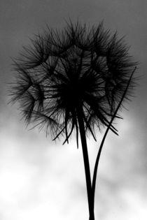 Flora-00009