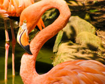 Flamingo-by-angelbaby2609-d383fwo