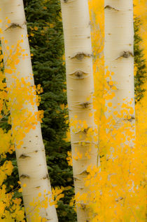 Aspen Dreams by Barbara Magnuson & Larry Kimball