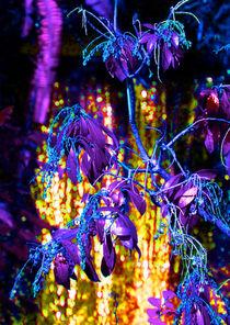 Fantasy Falls by Margaret Saheed