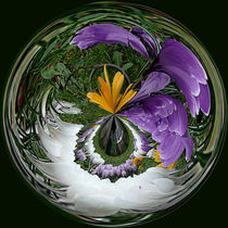 'Sphere of crocus' von Robert Gipson