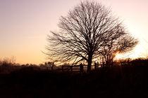 Tree At Sunset von Elizabeth  Wilson
