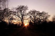 Sunset Through Trees von Elizabeth  Wilson