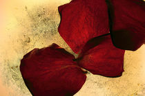 Textured Rose Petals by Elizabeth  Wilson