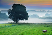 Monmouth Morning Mists by Graeme Pettit