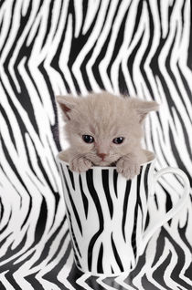 Zebra cat by Waldek Dabrowski