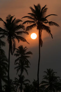 Palm-trees-at-sunrise-benaulim