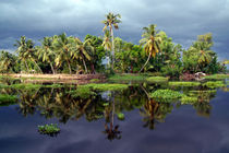 Palm-trees-in-a-storm-kerala-03