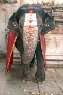 Laxmi the Elephant in Hampi Temple von serenityphotography